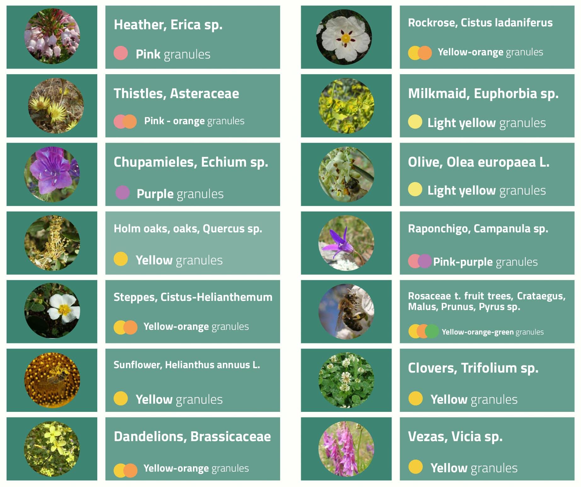 Botanical origins of the bee pollen