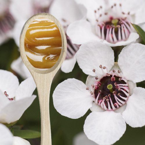 Manuka flower with honey