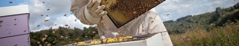 Beekeeper HoneyGreen